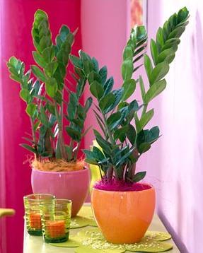 О растениях. Волшебная лампа